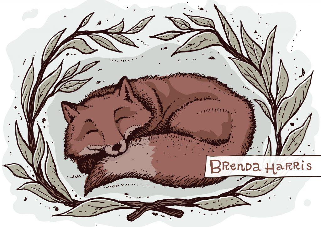 sleeping fox-01